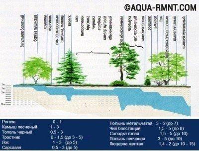 Об уровне залегания грунтовых вод могут подсказать растущие на участке растения