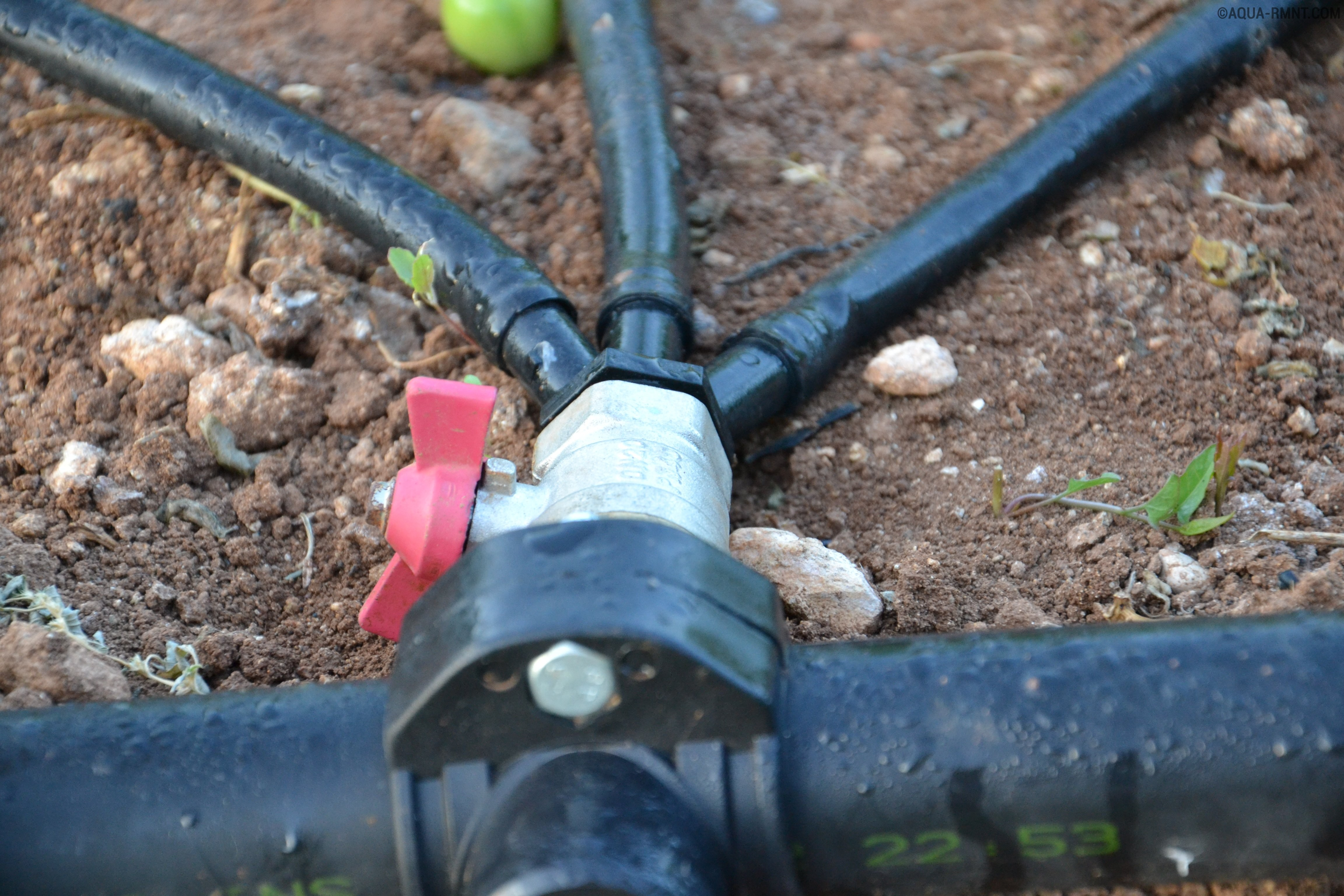 Как сделать систему капельного полива деревьев?