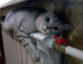 Кот лежит на радиаторе отопления под окном