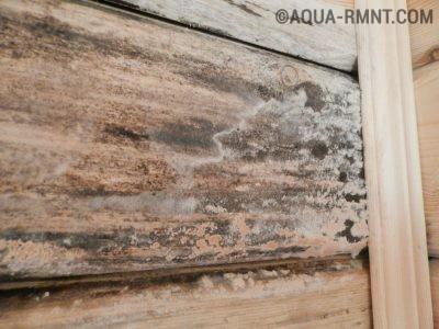 Поражение древесины плесенью