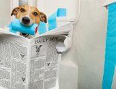 собака читает в туалете