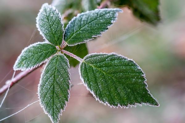 Замерзший листик